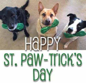 Happy St Pawtricks Day