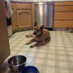 Homemade Dog Biscuit Assistant