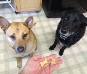 Homemade Dog Biscuit Taste Testers