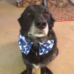 Bow Tie on Mindy