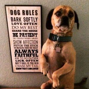 butch rules