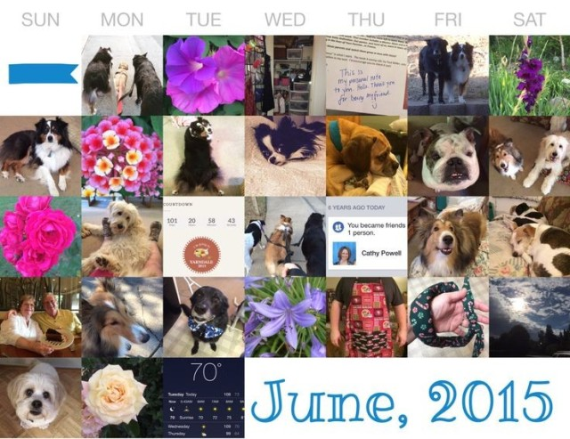 June in pictures